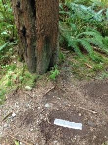 Taking a stomp trail sample